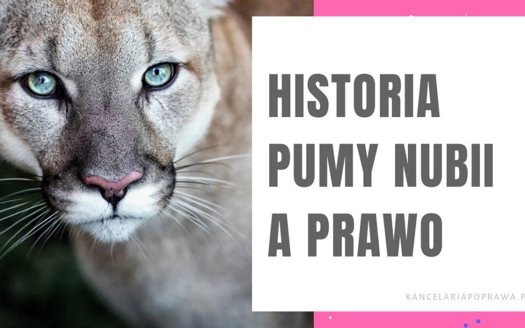 Historia pumy Nubii a prawo.